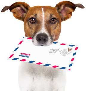 Newsletter dog